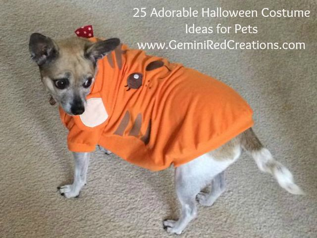 25 Adorable Halloween Costume Ideas for Pets